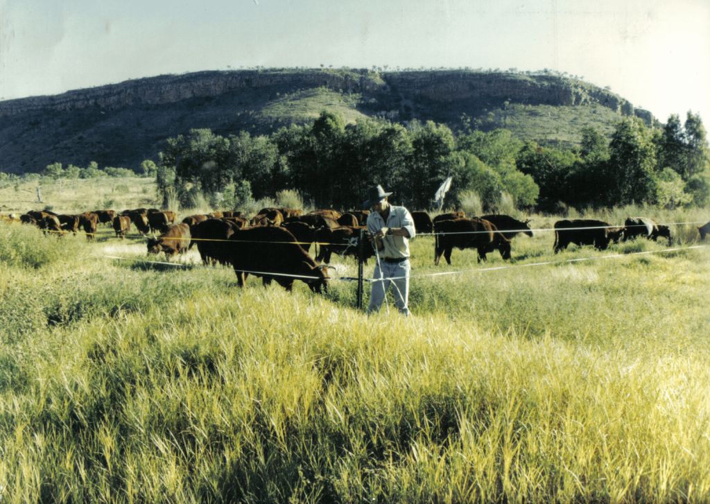 A photo of a green grassfield and cattle in Australia