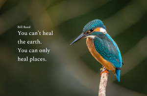 """Photo showing a kingfisher and text saying """"You can't heal the earth. You can only heal places."""""""